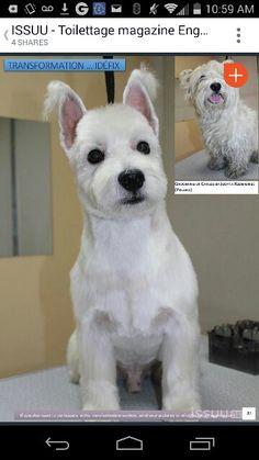 Asian westie groom Grooming Salon, Cat Grooming, Dog Grooming Styles, Dog Haircuts, Poodle Haircut, Westies, Creative Grooming, Puppy Cut, Can Dogs Eat Strawberries
