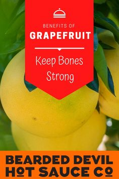 Grapefruits help keep bones strong. Grapefruit contains decent amounts of calcium and phosphorus, which both help keep bones and teeth strong. Spicy Sauce, Hot Sauce, Health Benefits Of Grapefruit, Fruit Sauce, Immune System, Teeth, Bones, Strong, Stuffed Peppers
