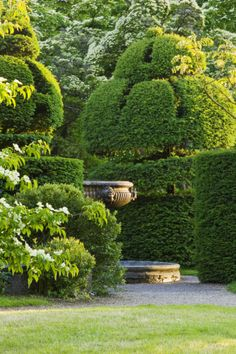 Notice how the urn, peeping out, causes the eye to pause & makes the shaped trees to stand out in greater relief.