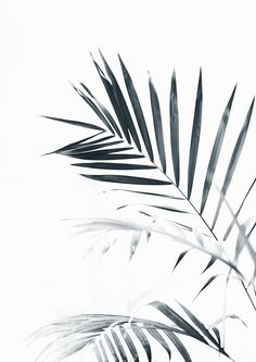 This printable wall art is High Resolution. Palm Leaves Palm Tree Black and white photography Printable wall art Scandinavian decor. Black And White Leaves, Black And White Wall Art, Black And White Painting, White Leaf, Black And White Posters, Black And White Wallpaper, Black And White Background, Black Tree, Black And White Design