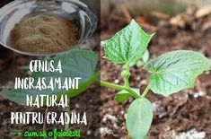 Growing Vegetables, Flower Crafts, Organic, Fruit, Garden, Sun, Agriculture, Plant, Garten