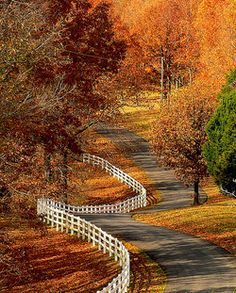 Winding road in beautiful Fall color Beautiful World, Beautiful Places, Beautiful Roads, Simply Beautiful, Beautiful Landscapes, Winding Road, All Nature, Autumn Nature, Fall Pictures