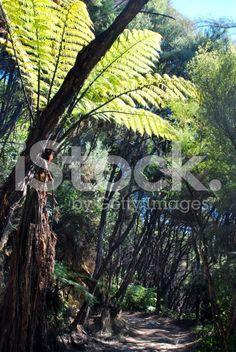 Punga Fern, New Zealand Walkway royalty-free stock photo