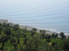 Olive trees by the sea in Halkidiki Greece .