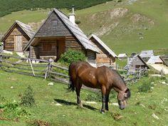 http://upload.wikimedia.org/wikipedia/commons/2/28/Prokosko_jezero,_pasouci_se_konicek.jpg