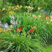 Garden Ideas, Perennial Planting, Perennial combination, Summer Borders, Fall Borders, Hemerocallis, Hosta, Alchemilla Mollis, Lady's Mantle, Daylilies, Plantain Lilies