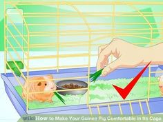 Image titled Make Your Guinea Pig Comfortable in Its Cage Step 9