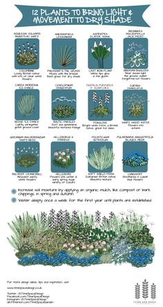12 plants to bring movement and light to dry shade time and space garden and