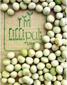 Semillas ecológicas de guisante para brotes / Organic pea seeds for green shoots