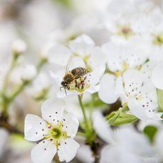Bienen voll im Einsatz - Tierpark Herberstein, Steiermark (Österreich)