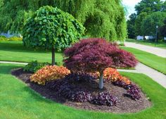 Easy and Cheap Landscaping Ideas That Look Anything But Gardening expert Mike McGroarty of Mike's Backyard Nursery planted herbaceous perennials and trees of varying heights — lavender twist red bud tree and a laceleaf weeping Japanese red maple — to form Landscaping Trees, Front Yard Landscaping, Landscaping Software, Inexpensive Landscaping, Luxury Landscaping, Corner Landscaping Ideas, Outdoor Landscaping, Landscaping Melbourne, Landscape Around Trees