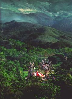 Forest Carnival