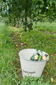 Curious of what goes on on a real cider farm in Somerset? Join The Travel Tester to the orchards, mill and tasting room on a Thatchers Cider Tour! Stuff To Do, Things To Do, Drinking Around The World, Weekend Breaks, English Countryside, Culture Travel, Somerset, Northern Ireland, Road Trips