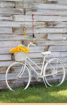 Vintage white bike, wood wall  and beautiful yellow flowers   love xx