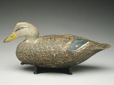Fine black duck, Ira Hudson, Chincoteague, Virginia.