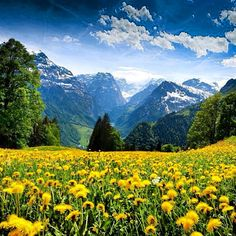 "Alps--Austria...  Can't you just hear Maria singing in the meadow...""The hills are alive with the sound of music...."""