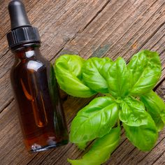 Basil Essential Oil Fights Bacteria, Colds