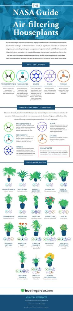 Houseplants are awesome indoor air cleaners, but some of them are more effective than others at filtering out pollutants and toxic chemicals in the air. This infographic highlights the best air-filtering plants, according to a NASA study.