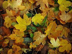 Walking Through November The Borrowers, November, Fruit, Yellow, November Born