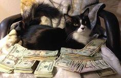 cashcats instagram - Google Search