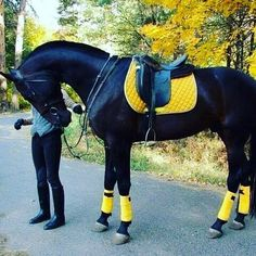 Smart country horse fashion - stunning in yellow, especially the boots. - Stephanie Anne Noelie - - Smart country horse fashion – stunning in yellow, especially the boots. Smart country horse fashion – stunning in yellow, especially the boots. Cute Horses, Pretty Horses, Horse Love, Beautiful Horses, Animals Beautiful, Horse Fashion, Horse Riding Fashion, Horse Gear, Horse Tips