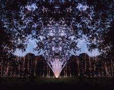 Harry Cory Wright, Mirrored Orange Rapid 200 Shot Oak Canopy,  2012, Pigment ink print, 39 x 47 in / 105 x 120cm, Edition of 10