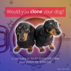 You Can Buy A Clone Of Your Dog Discovery Channel Shows, Passed Away, Dog Art, Dog Breeds, Your Dog, Science, Puppies, Feelings, Pets