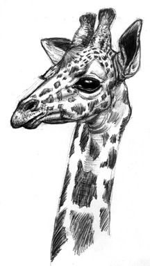 Animal by MissJema on @DeviantArt