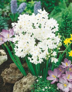 Great information on growing amaryllis and paperwhites for the holidays #holiday #tips | From The Home Depot Community Forums