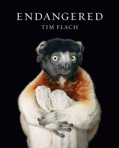 "Read ""Endangered"" by Tim Flach available from Rakuten Kobo. In Endangered, the result of an extraordinary multiyear project to document the lives of threatened species, acclaimed p. Latest Books, New Books, Abrams Books, Amazing Animals, Adorable Animals, Human Settlement, Endangered Species, Bird Species, The Guardian"