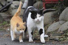 <b>猫に九生あり</b><br>(イギリス・フランス・ドイツ・ロシアの言葉)<br> 意味:執念深い。ちょっとやそっとじゃ死なない。<br> 猫は基本的に野生っぽさを失わないので、たとえば逆さの状態から下に落ちたとしてもうまく着地することもできます。そんな猫を「執念深い動物」としてとらえた言葉です