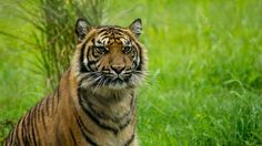 Terima taken by visitor Steve Rowland @AnnasWelshZoo 2015