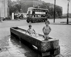 London 1957 London Pride, London History, London Photos, Old Photos, Horse Trough, Childhood, Bathing, Horses, Memories