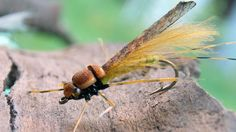 Adult stone fly - dry fly tying instructions by Ruben Martin