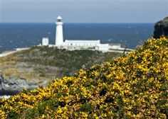 South Stack Cliffs Slideshow - South Stack Cliffs - South Stack Cliffs - The RSPB Community