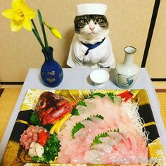 Honorable Chef Mittens