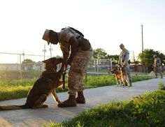 Military dogs need homes after their service is over ♥ #military #dog #adoptions