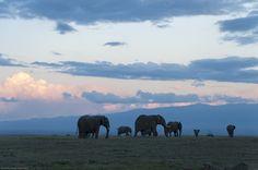 Elephants under Laikipia's big open skies
