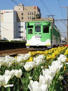 Tulips & train_ Japan