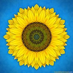 this is exactly what i had in mind for a tattoo - sunflower mandala Mandalas Painting, Mandalas Drawing, Dot Painting, Painting Trees, Sunflower Mandala, Sunflower Pattern, Mandala Tattoo, Mandala Art, Adult Coloring Pages