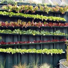 Steal impressive Exceptional Rain Gutter Garden Gutter Vertical Garden design recommendations from Virginia Coleman to upgrade your living area. Gutter Garden, Fence Garden, Fence Plants, Fence Art, Farm Fence, Garden Water, Garden Farm, Box Garden, Vegetables Garden