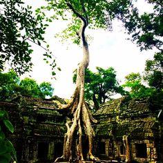 Ta Prohm, Angkor... Siem Reap Cambodia