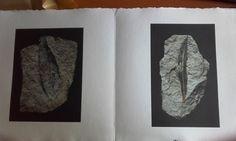 Livre photographique de Dominique Laugé, accompagné d'un poème de Maya de Chanterac. L'artiste a photographié les réserves des musées d'histoire naturelle de Gaillac, d'Alexandrie et de Turin. Dominique, Turin, Maya, Bookends, Painting, Home Decor, Natural History Museum, Alexandria, Artist