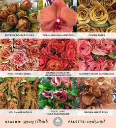 Coral wedding flowers and mustard wedding flowers create a sunset color palette featuring spring wedding flowers. Anemone Flower, Cactus Flower, Flower Bouquets, Exotic Flowers, Colorful Flowers, Fresh Flowers, Purple Flowers, White Clematis, Floral Arrangements