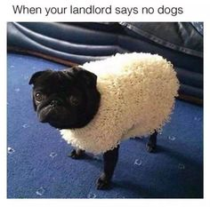 Dogs are not allowed!!!! http://ibeebz.com