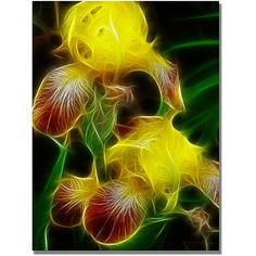 Trademark Art Yellow Iris Canvas Art by Kathie McCurdy, Size: 35 x 47, Yellow