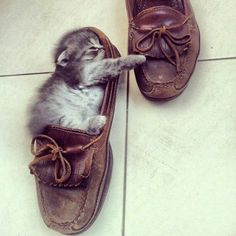 A Little Cat That Fits In A Shoe!