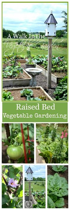 Raised Bed VEGETABLE GARDEN - planted in French intensive style with lots of veggies and flowers packed in tightly to keep weeds and bugs at bay, uses companion plants to keep it organic, love the way she makes it look pretty with flowers intermingled, bird bath, bird house, and pavers around the beds to make a walkway