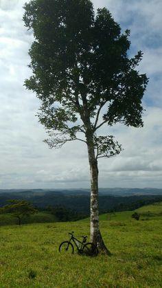 Minha terra linda. Alagoas...