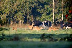 10 waanzinnige wandelingen in het Friese landschap   Friesland.nl
